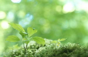 森の香クリーンサービス